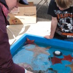 Kids Hands-on Tide Pool